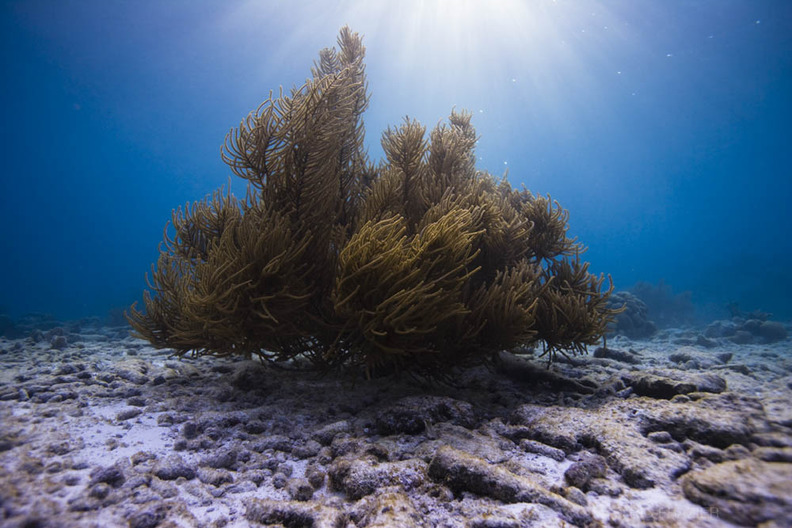 underwater photography Bonaire